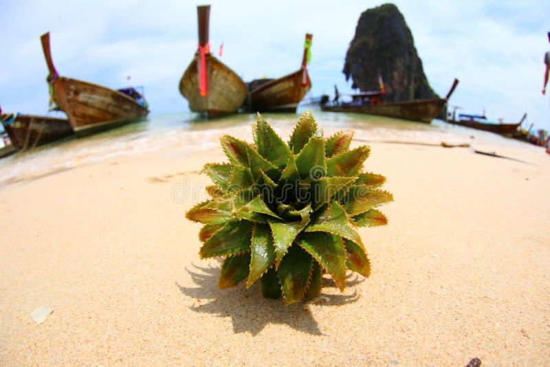 Taggig grön växt på sanden mot bakgrunden av fartygstationer i Thailand på stranden royaltyfri bild
