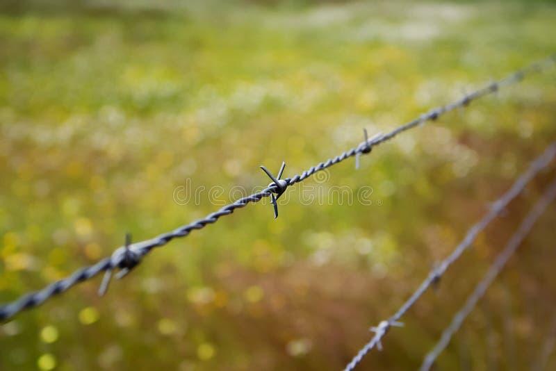 taggtråd 02 arkivfoto
