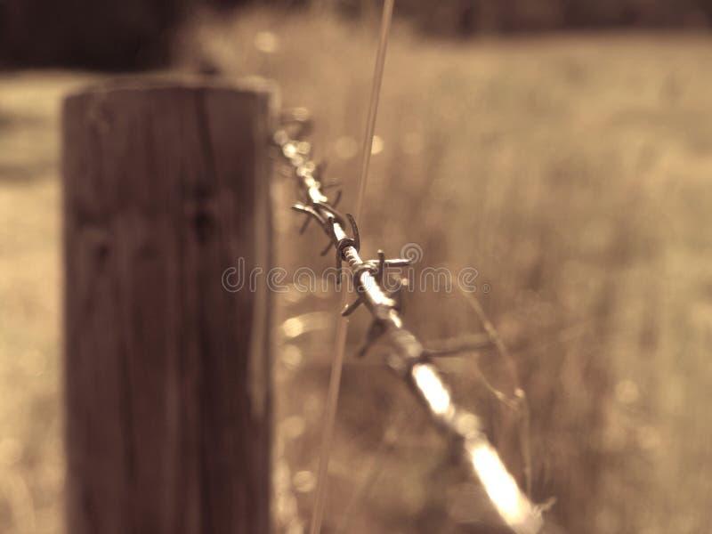 taggtråd royaltyfri foto