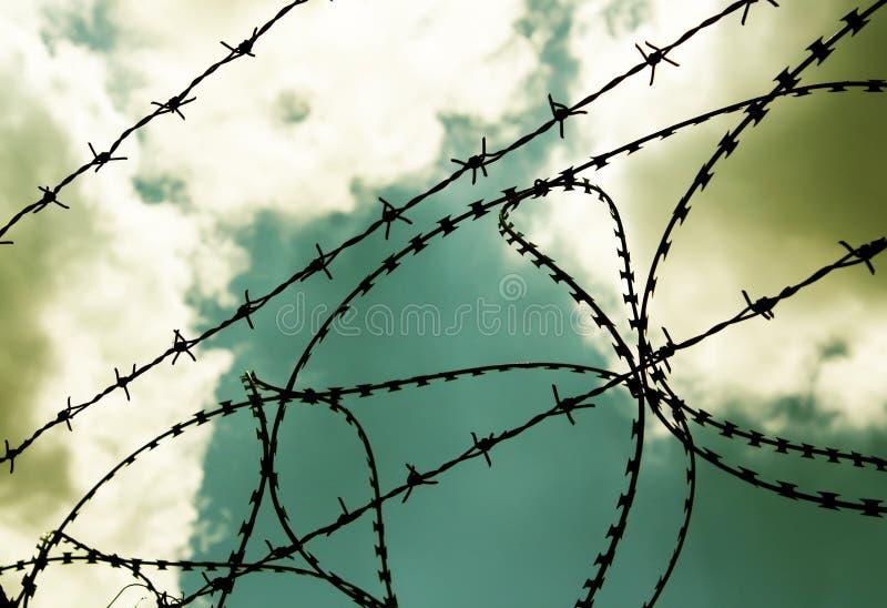 taggtråd arkivbilder