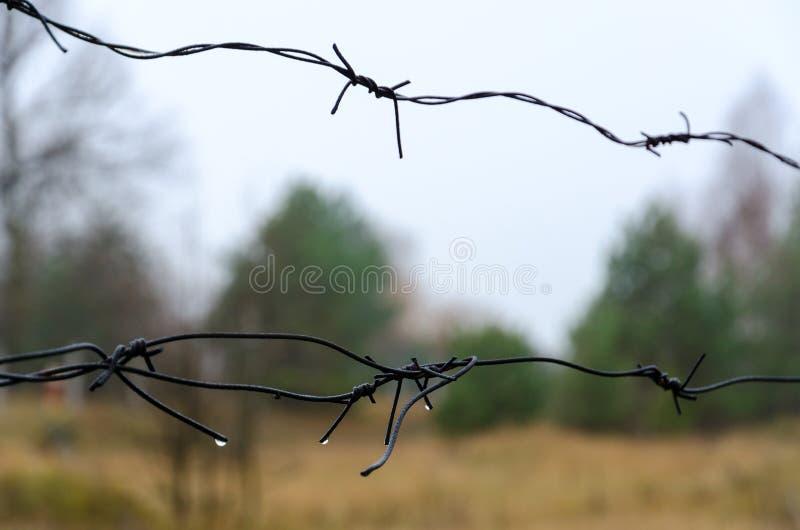 Taggtråd i uteslutandezonen av Tjernobyl NPP, dystert höstlandskap, Ukraina fotografering för bildbyråer