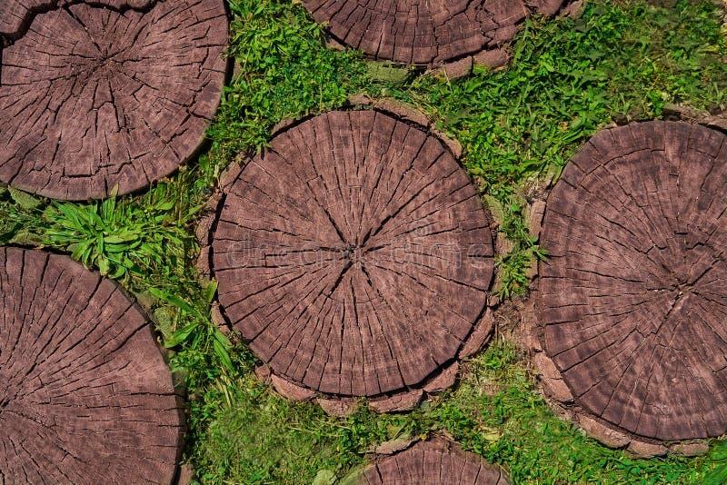 Tagli dell'albero come fondo per gli artisti immagini stock
