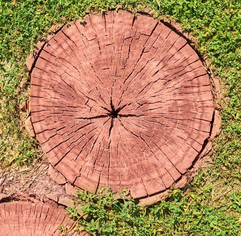Tagli dell'albero come fondo per gli artisti immagine stock