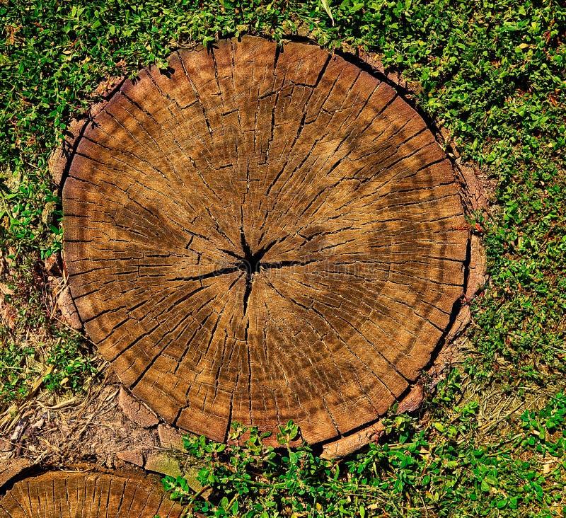 Tagli dell'albero come fondo per gli artisti immagine stock libera da diritti