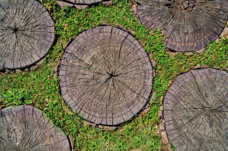 Tagli dell'albero come fondo per gli artisti immagini stock libere da diritti