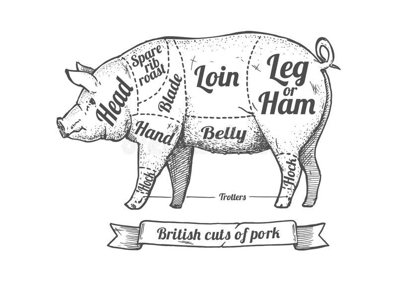 Tagli di carne di maiale royalty illustrazione gratis