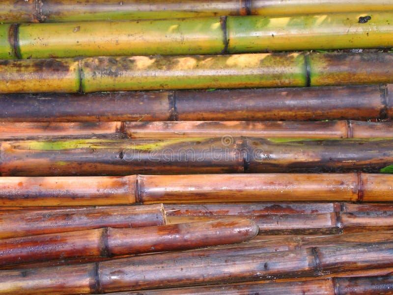 Download Tagli Di Recente Pali Di Bambù Immagine Stock - Immagine di taglio, duro: 206811