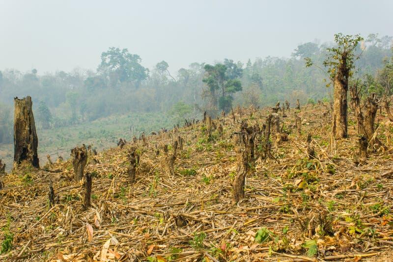 Tagli e bruci la coltivazione, foresta pluviale tagliata e bruciata per piantare immagini stock