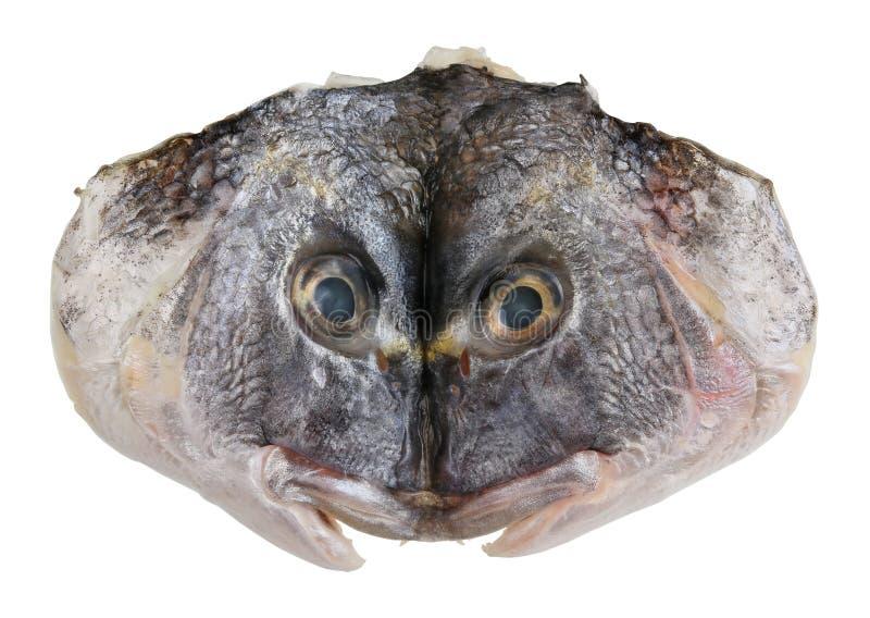 Tagli ed appiattito la testa del pesce di mare di Dorado fotografie stock