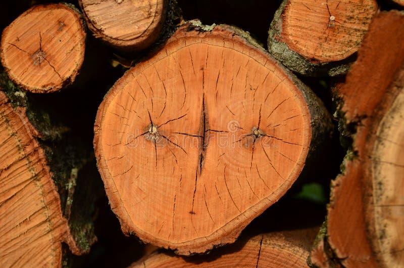 Tagli ed impilato i ceppi della legna da ardere fotografia stock libera da diritti