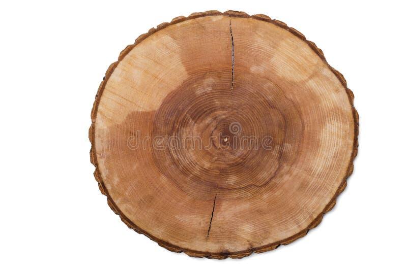 Tagli gli anelli di crescita dell'albero immagine stock