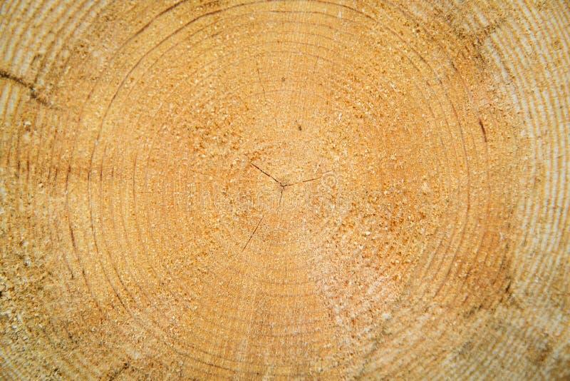 Tagli i libri macchina Taglio del legno asciutto, registrare di industriale fotografia stock libera da diritti