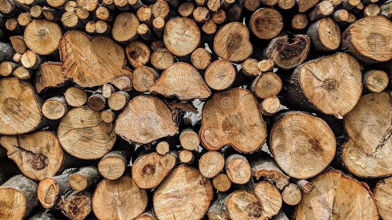 Tagli i rami di albero ed ha impilato fotografie stock libere da diritti