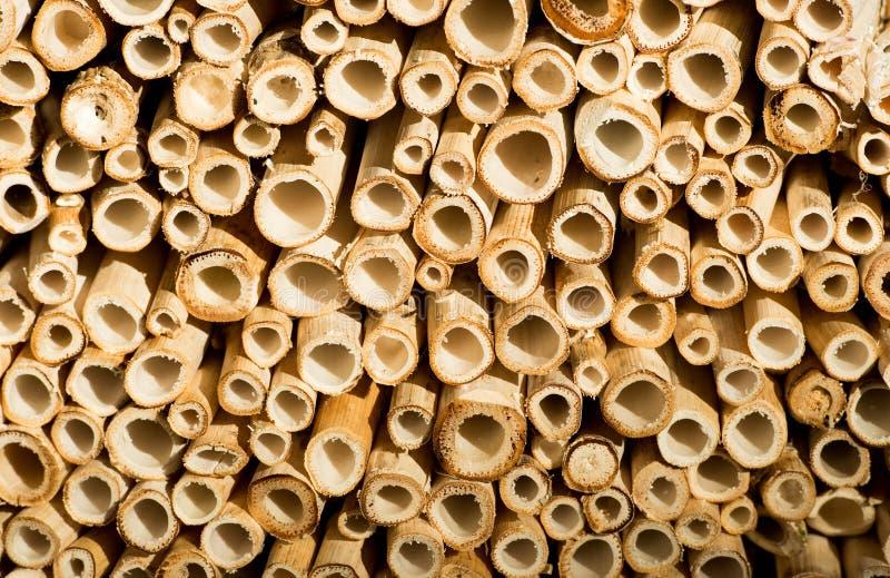 Tagli il fondo dei bastoni del bambù fotografia stock libera da diritti