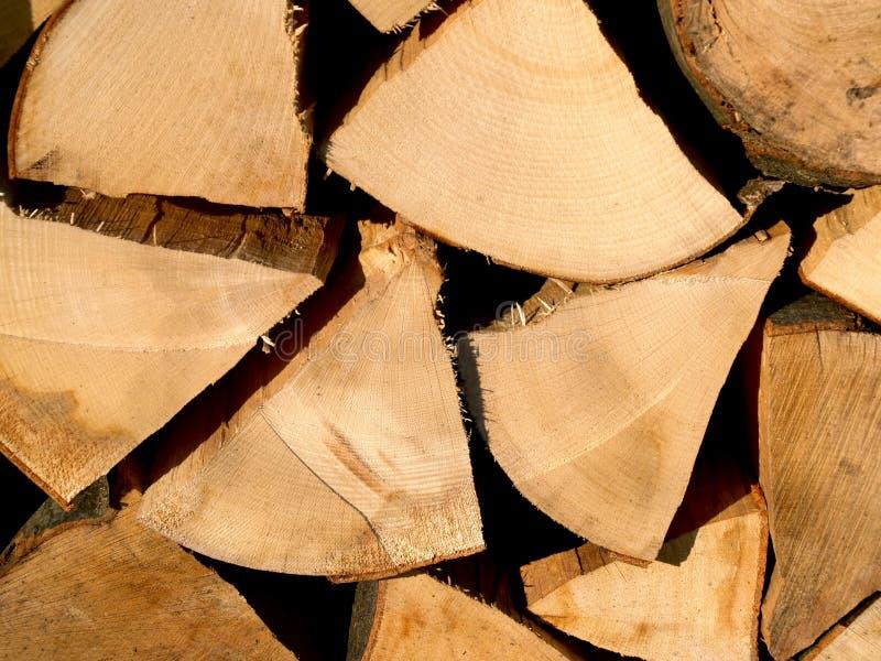 Tagli il legno di faggio fotografia stock libera da diritti