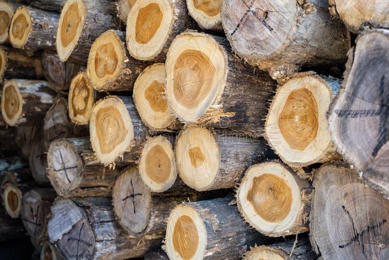 Tagli il pino annotare Anelli annuali sul pino del taglio I ceppi hanno visto Sawmi fotografia stock
