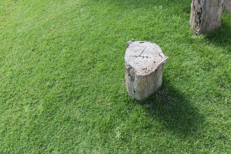 Tagli l'albero sul campo di erba verde Fondo del ceppo con lo spazio della copia Natura e concetto dell'ambiente Risparmio e risp fotografia stock libera da diritti