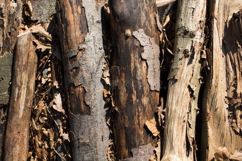 Tagli la superficie del ceppo di albero come fondo immagini stock