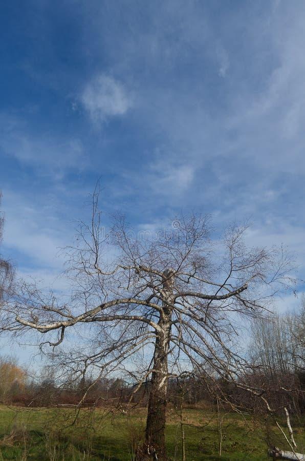 Tagli Treetrunk che raggiunge per il cielo fotografie stock
