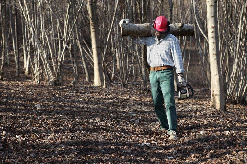 Taglialegna del boscaiolo con i collegamenti di trasporto della motosega dell'albero grande fotografia stock