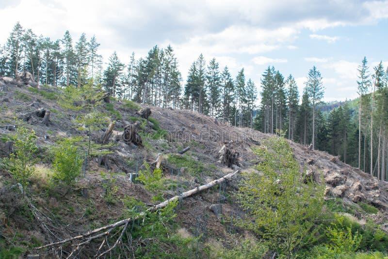Tagliare gli alberi fuori di più forrest immagine stock