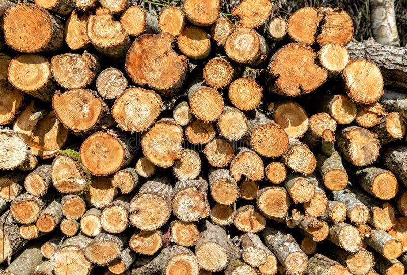 Tagliato ed impilato su legna da ardere asciutta come fondo immagine stock libera da diritti