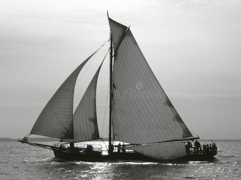 Tagliatore olandese fotografie stock libere da diritti
