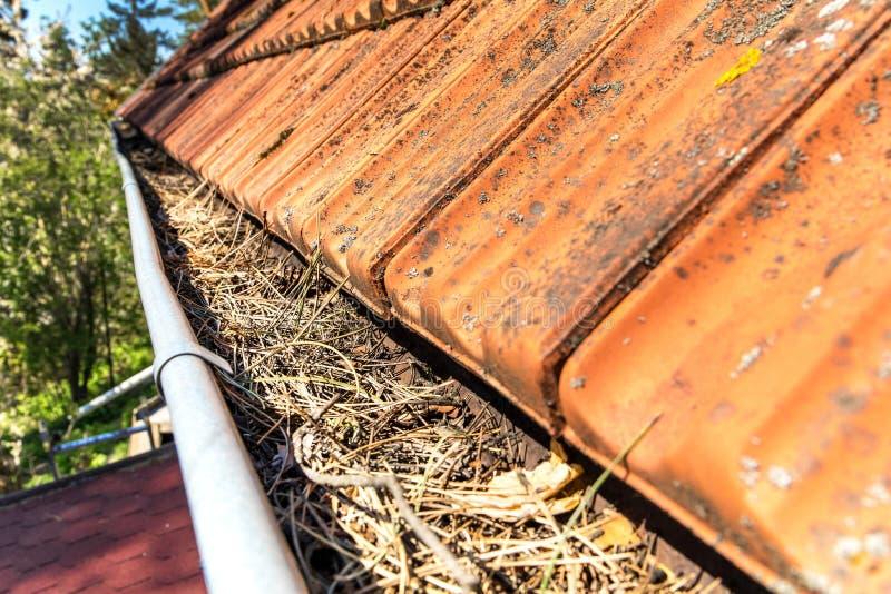 Tagliatrici piene di detriti da pulire Sacchetto intasato con aghi e detriti di pino Lavori in casa fotografie stock libere da diritti