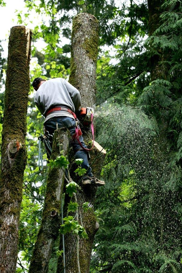 Taglierina dell'albero immagini stock libere da diritti