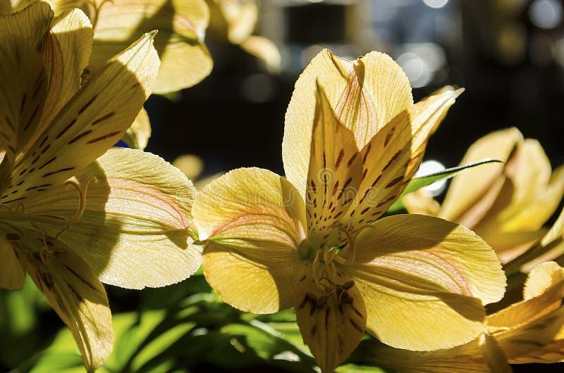 Taglilieblumen-Blumenblattkunst lizenzfreies stockbild