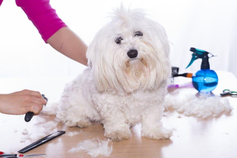 Taglio canino dei capelli fotografia stock