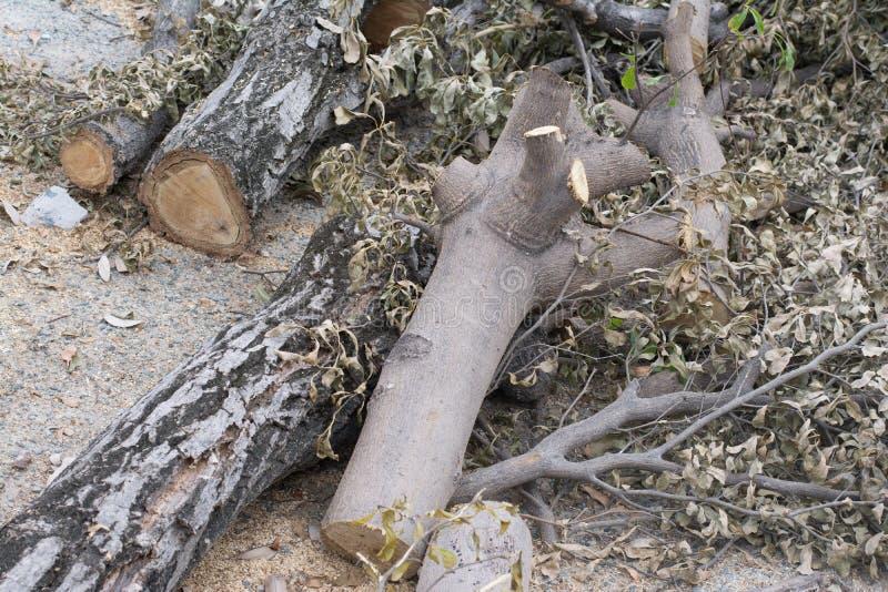 Taglio degli alberi immagini stock libere da diritti
