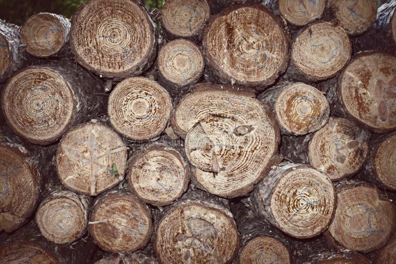 Taglio degli alberi ed impilato fotografia stock libera da diritti