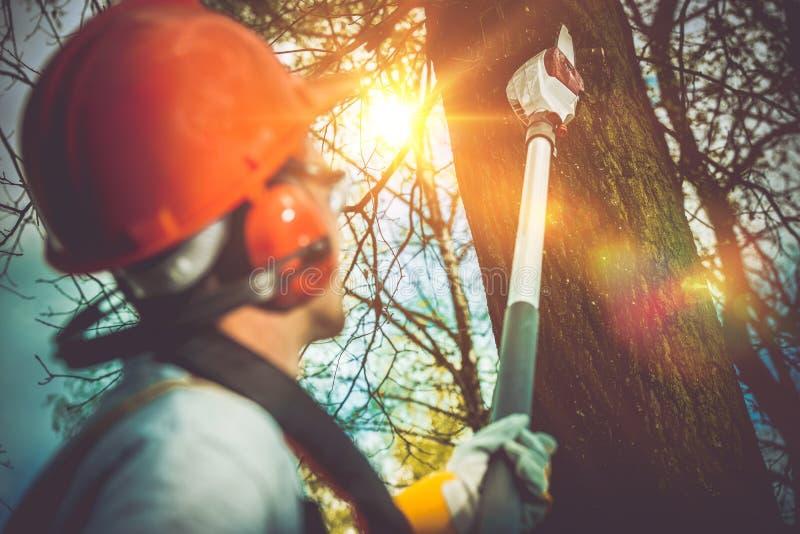 Taglio dei rami di albero pro fotografia stock libera da diritti