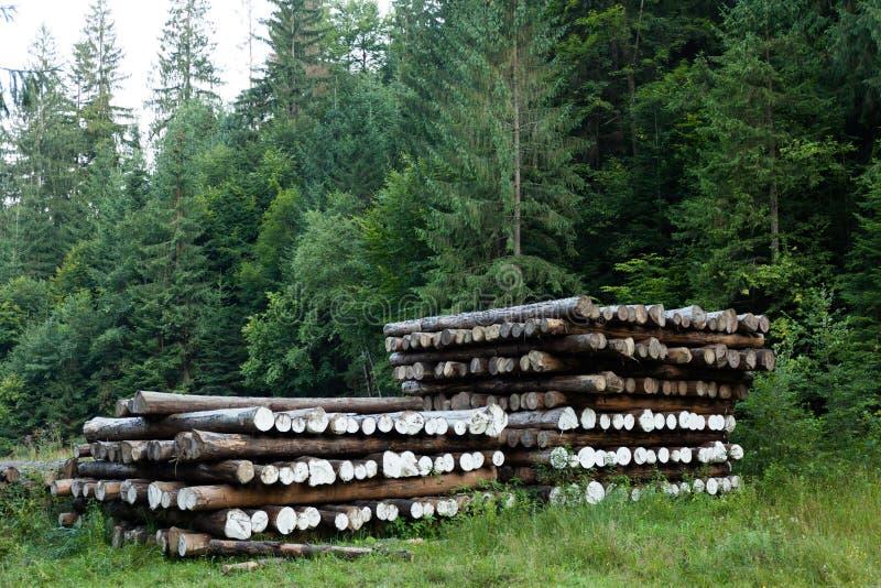 Taglio del ceppo dell'albero, campagna della foresta Materiale della natura fotografie stock libere da diritti