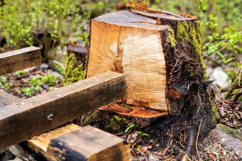 Taglio dell'albero per rendere stanza per qualche cosa di nuova immagini stock libere da diritti