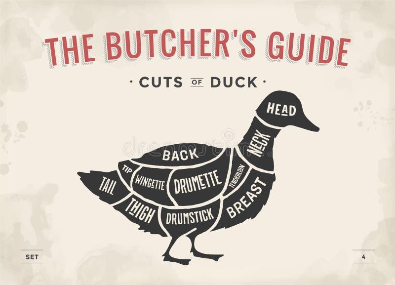 Taglio dell'insieme della carne Diagramma del macellaio del manifesto e schema - anatra Disegnato a mano tipografico d'annata Ill illustrazione di stock