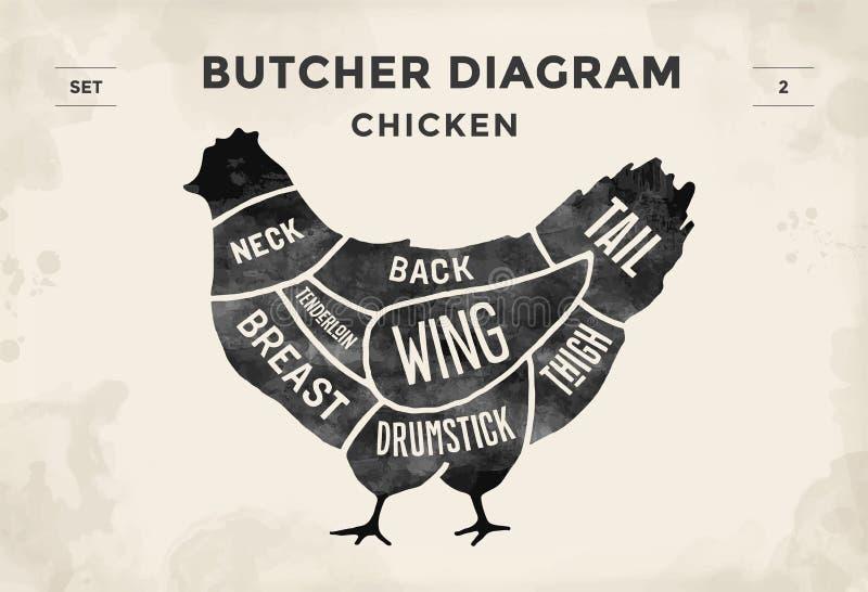 Taglio dell'insieme della carne Diagramma del macellaio del manifesto e schema - pollo Disegnato a mano tipografico d'annata Illu illustrazione vettoriale