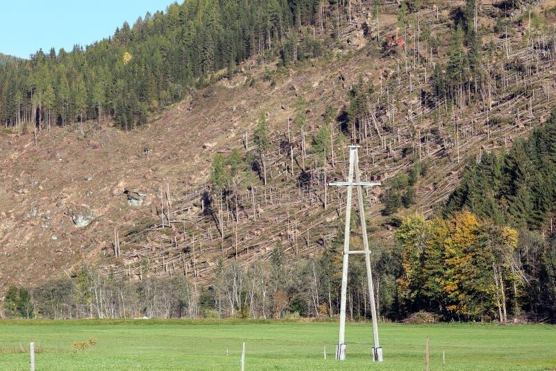 Taglio della foresta sul pendio di montagna vicino al villaggio Hinterkoflach Carinthia, Austria fotografia stock libera da diritti