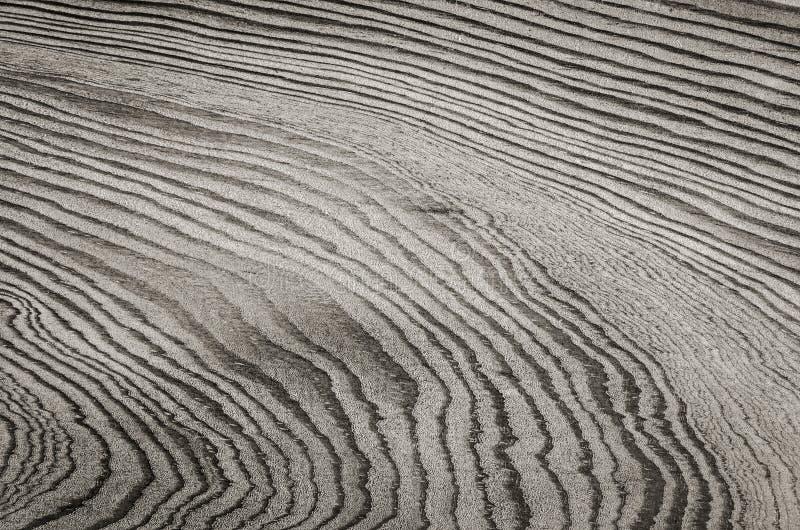 Taglio di legno del ceppo immagine stock libera da diritti