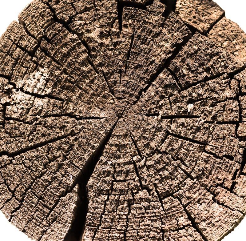 Taglio di legno del libro macchina fotografia stock libera da diritti