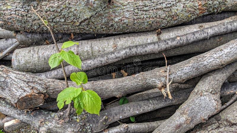 Taglio di rami dell'albero ed allineato fotografie stock