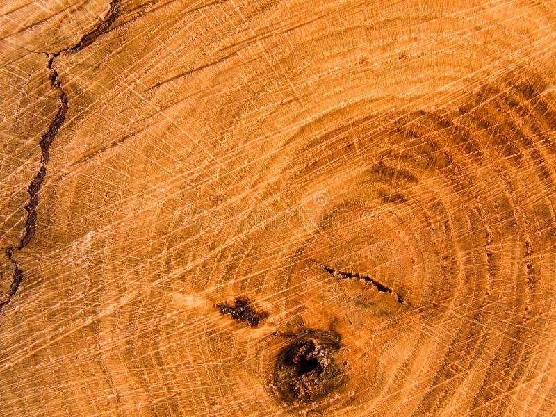Taglio di un albero una quercia immagini stock libere da diritti