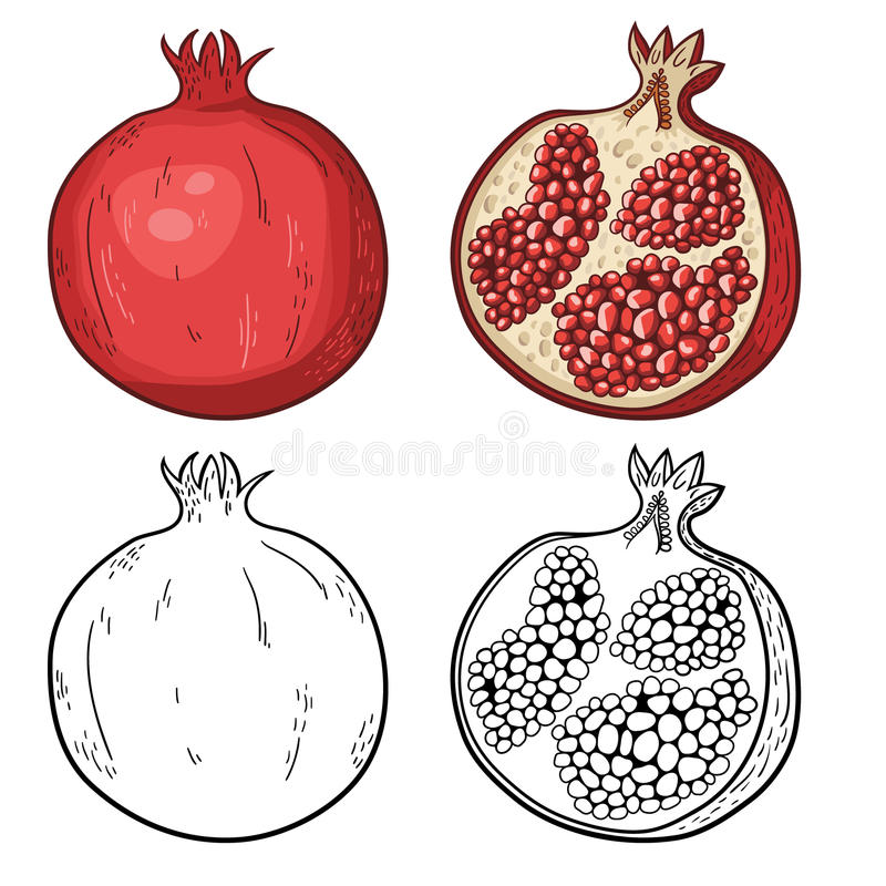 Taglio organico naturale del dolce e melograno affettato illustrazione di stock