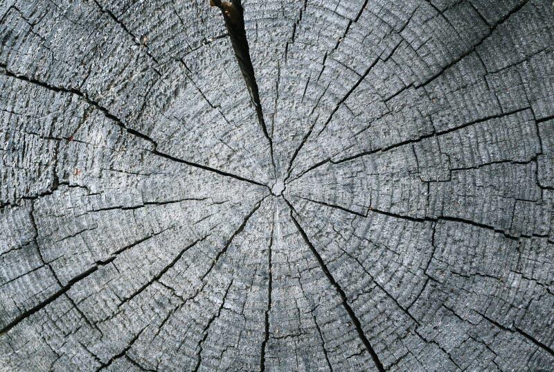 Taglio radiale di vecchio ceppo asciutto fotografie stock
