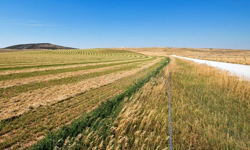 Taglio - rastrellato - giacimento dell'alfalfa accanto alla strada non asfaltata nelle montagne di Pryor nel Montana immagini stock libere da diritti