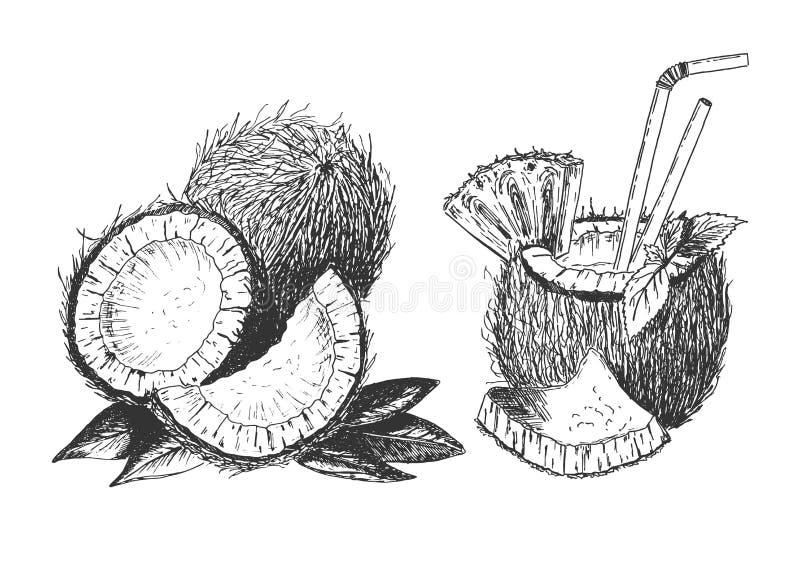 Taglio tropicale della noce di cocco messo con la bevanda del cocktail illustrazione di stock