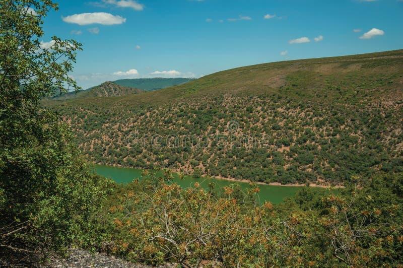 Tagusrivier die die een vallei met heuvels doornemen door bomen worden behandeld stock foto