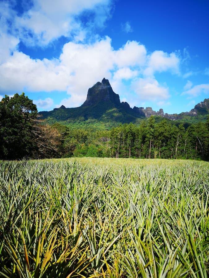 Tahiti. French Polynesia Bora Bora. French polynesia. , sky, vacation royalty free stock photography