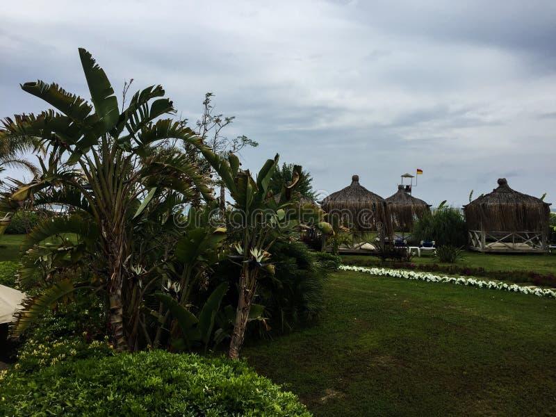 Tahiti trawa i palmy zdjęcie royalty free